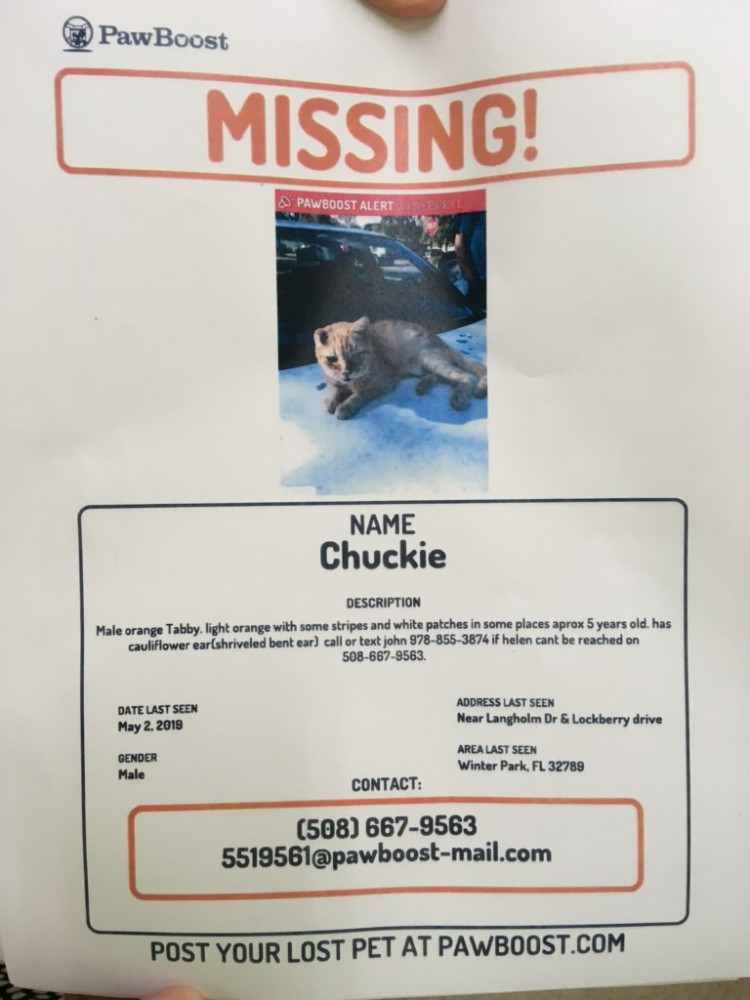 Lost Male Cat (Orange and White, DSH)