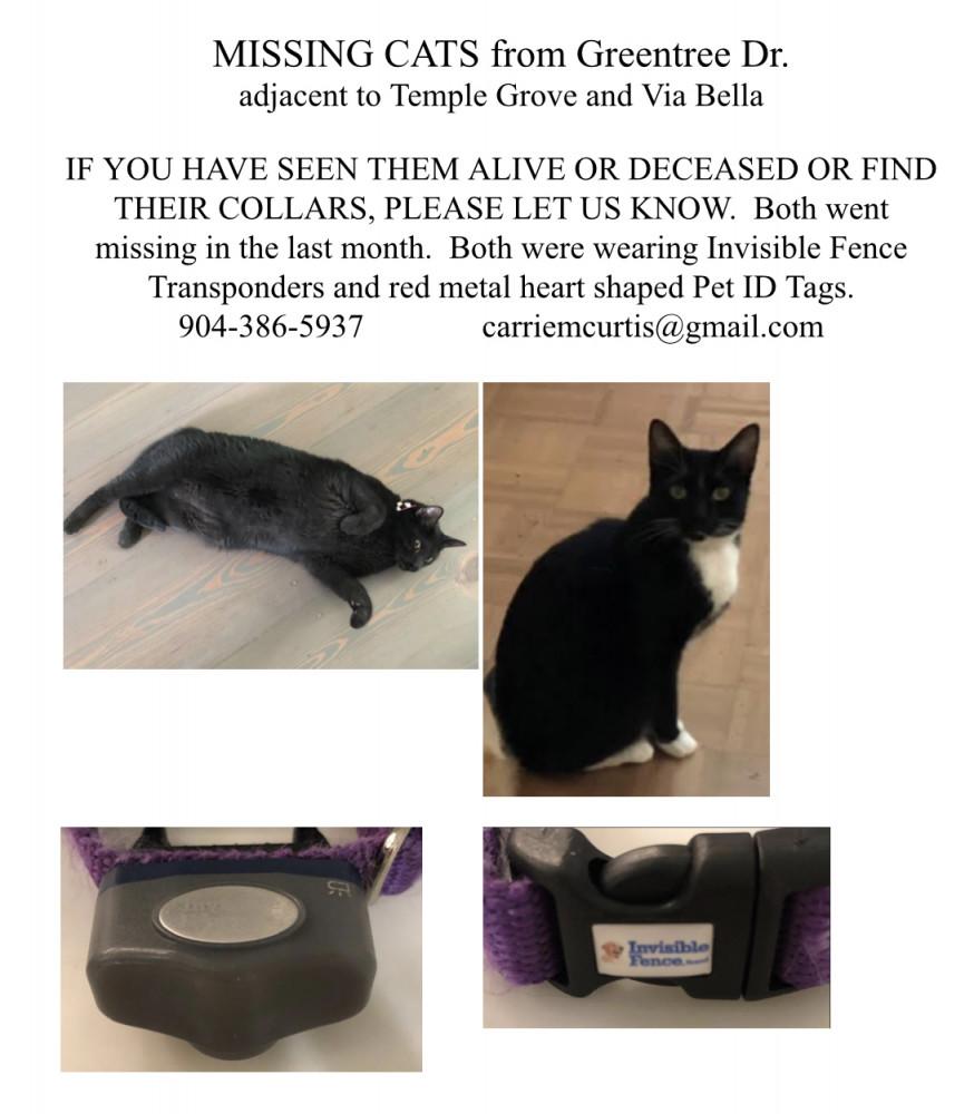Lost Male Cat (Black, Blk/White, DSH)