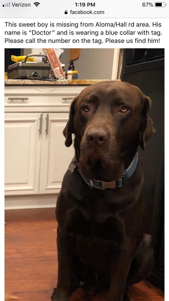 Reunited Male Dog (Dark brown, Chocolate Lab)