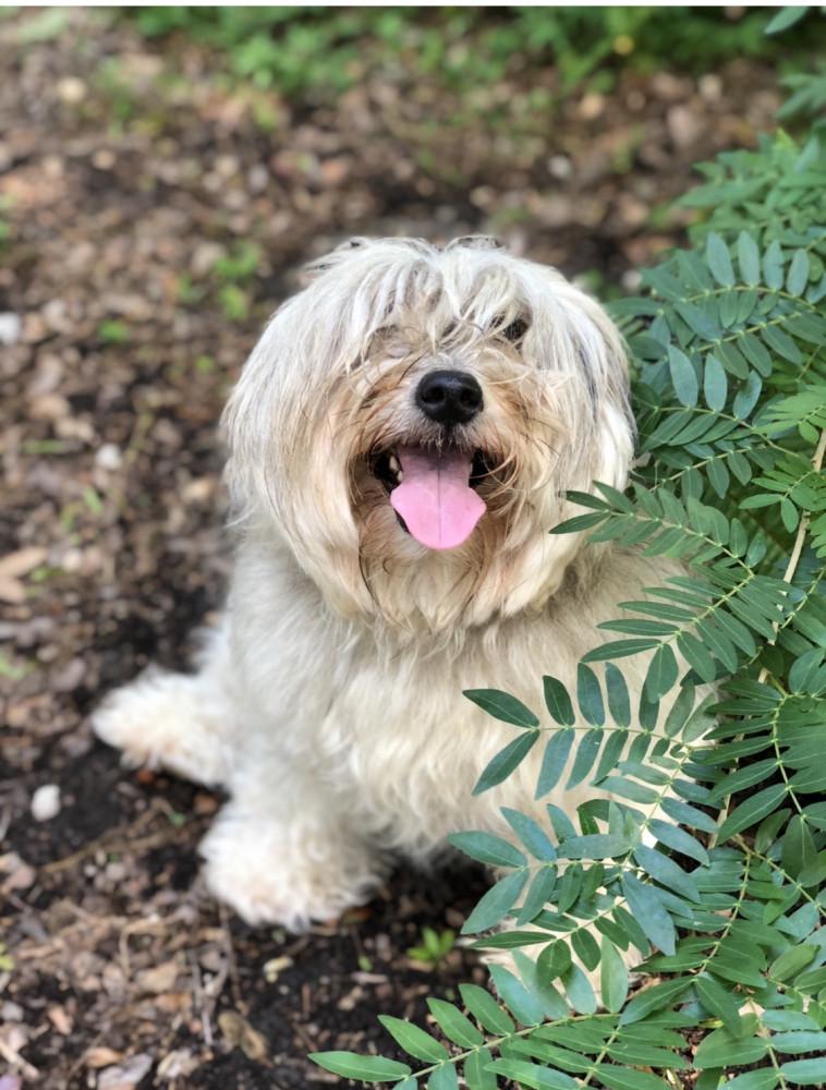Lost Female Dog (Grey, White, Mix)