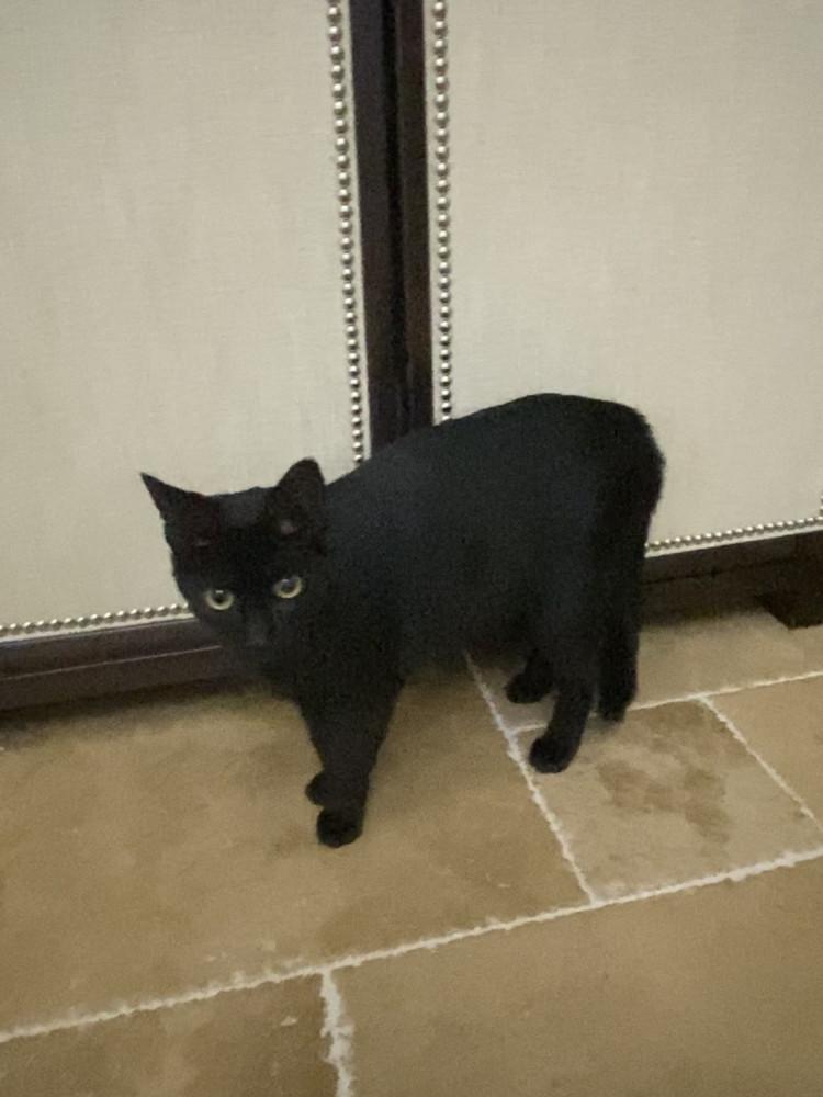 Found Female Cat (Black, Not sure)