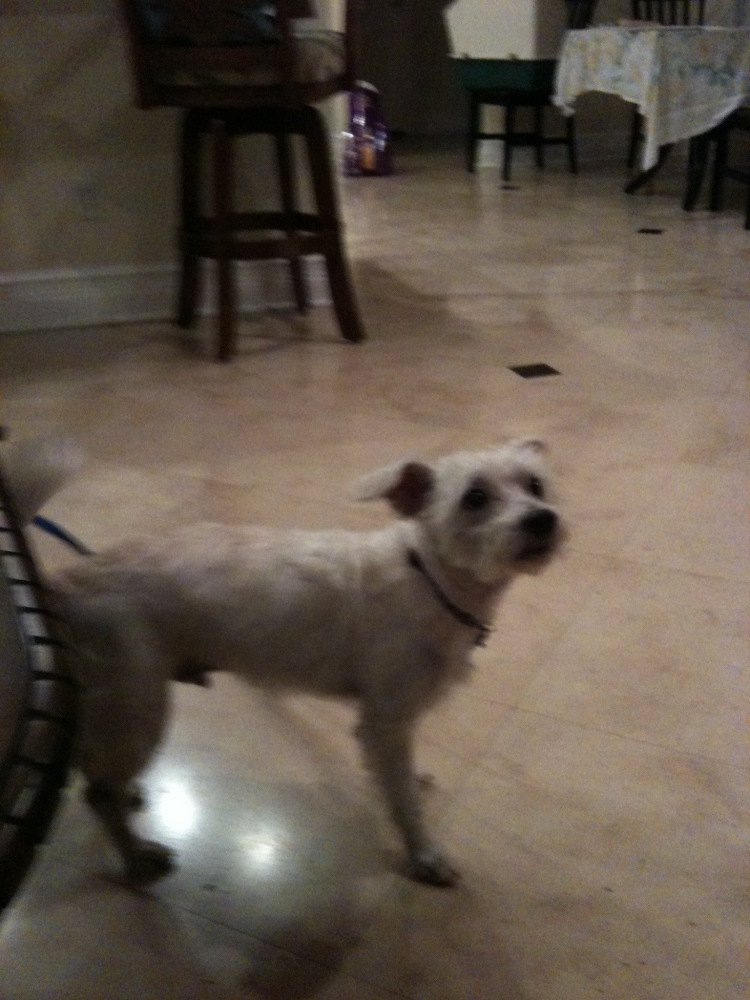 Reunited Male Dog (white, mixed)