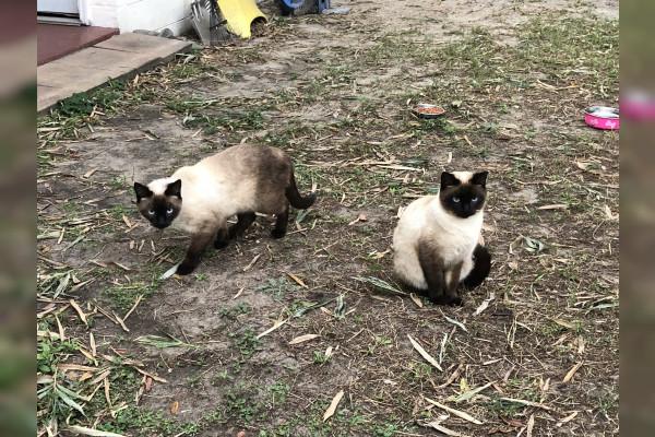 Plumpy and Tucker